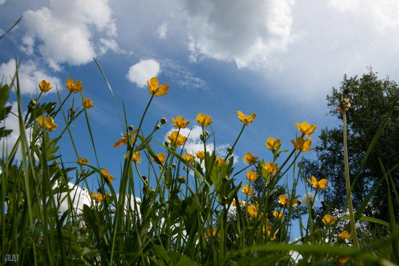 Последний день весны... А завтра - лето....