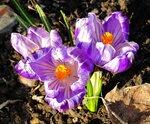 Пробуждение природы. Первоцветы.