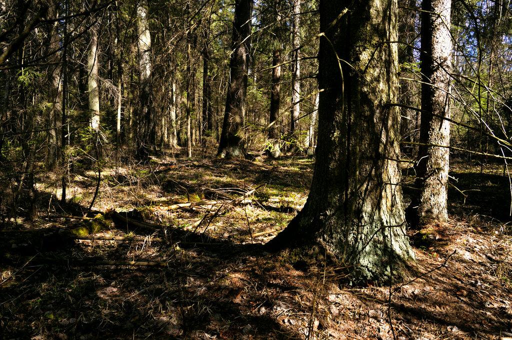 весна в дремучем лесу