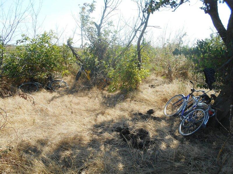 Приют для велолошадок ... DSCN8763.JPG