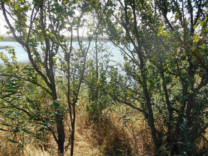 За деревьями воды ... DSCN8786.JPG