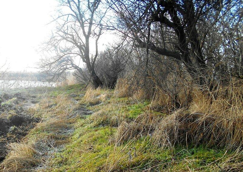На опушке лесной, у озера ... DSCN0422.JPG