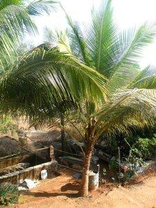 Индия, фотоальбом, фотографии В. Лана ... SAM_7002.JPG