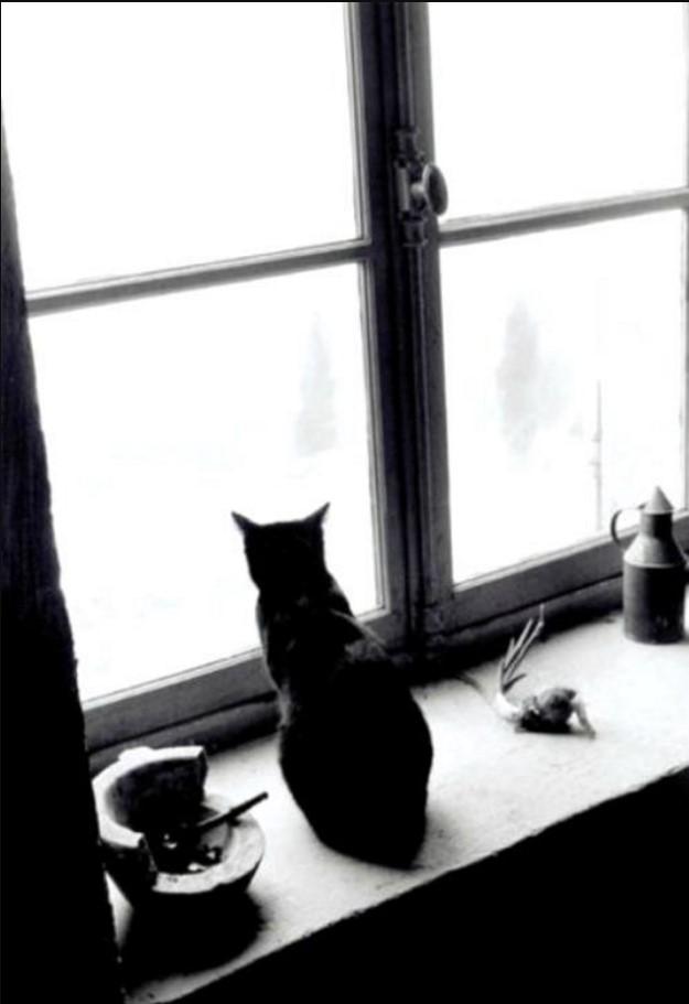 1959. Кошка у окна, Горд