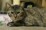 кошка мама-2.jpg