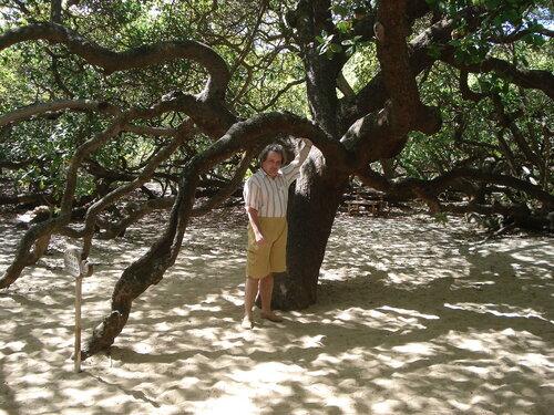 Дерево-парк