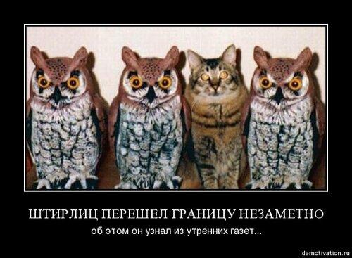 Совы и коты картинки