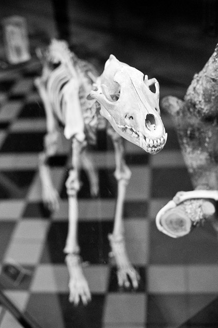 фотография очень древнего и ласкового животного