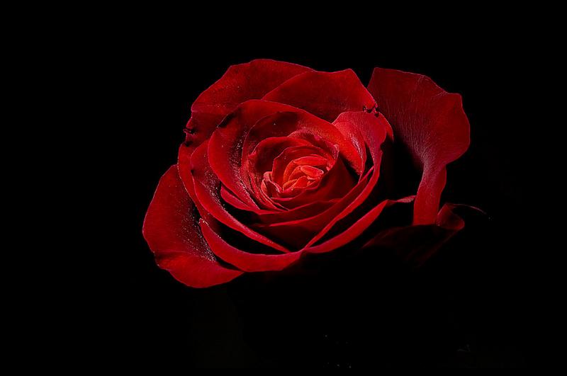 Анекдоты фото, анимация красные розы