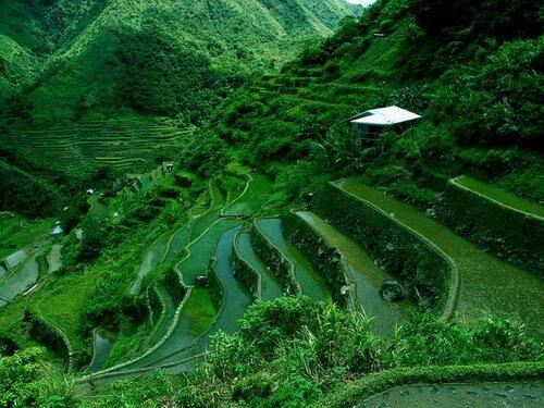 Рисовые террасы Банауэ (Banaue). Филиппины