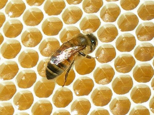 чем полезен мед