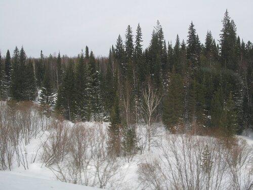 зимний вид сибирской тайги
