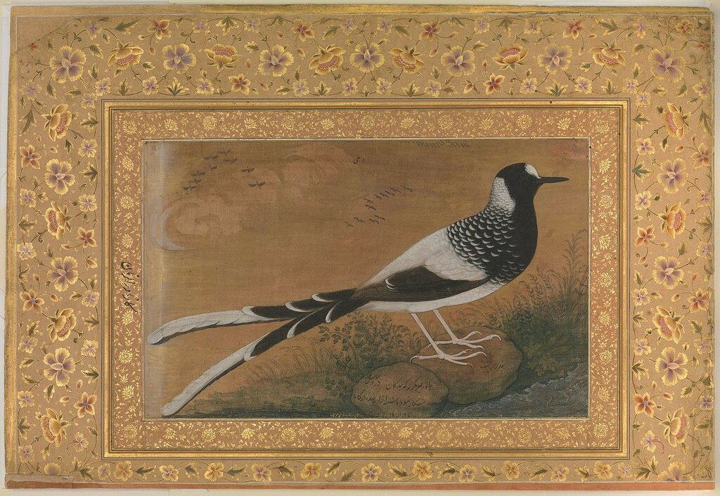 1280px-7_Abu'l_Hasan,_Spotted_Forktail,_Folio_from_the_Shah_Jahan_Album_ca__1610–15_Metropolitan_Museum_New-York.jpg