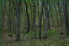 http://img-fotki.yandex.ru/get/131107/15842935.2b5/0_e2628_a1fa24f_orig.png