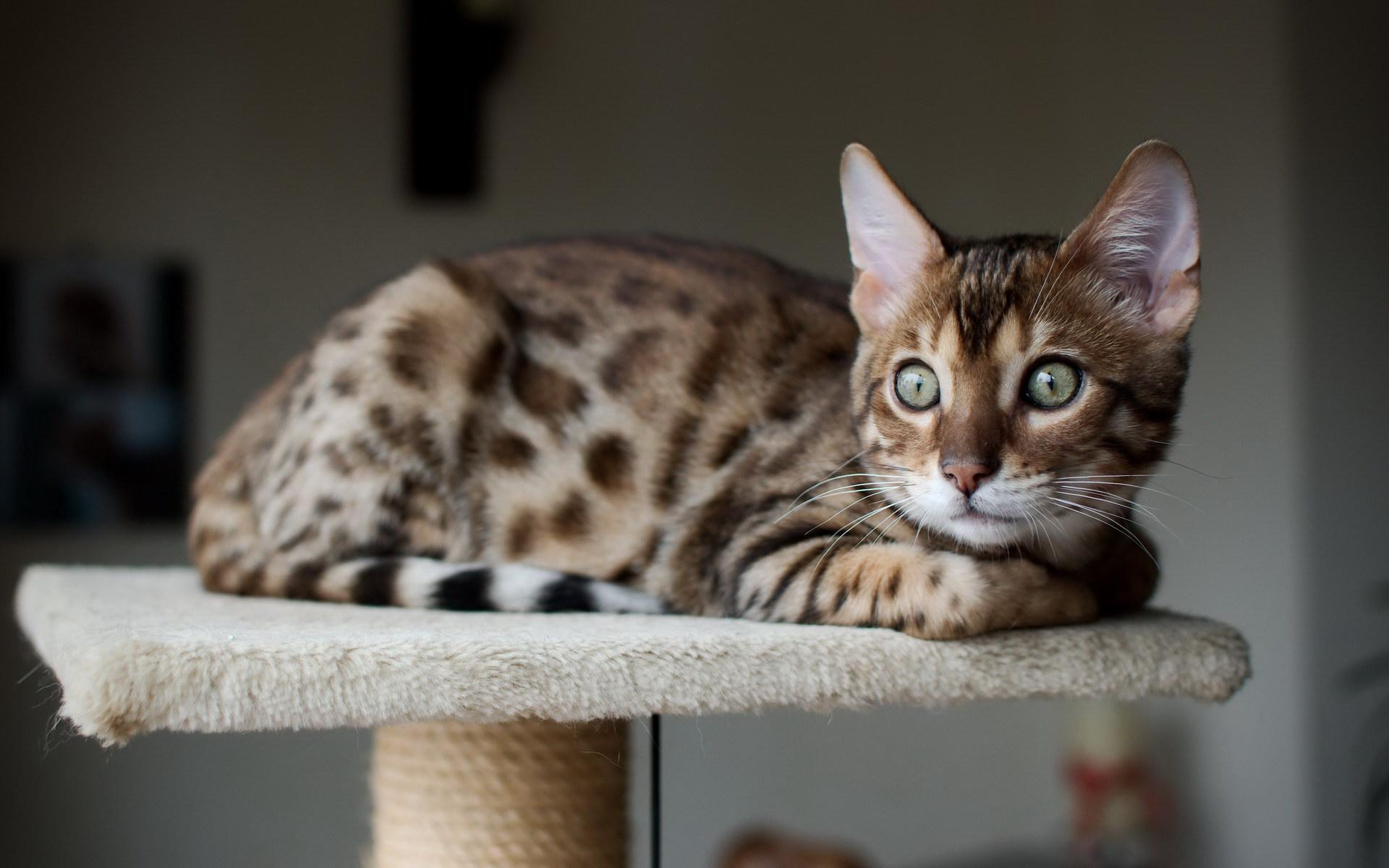 Сумний котик