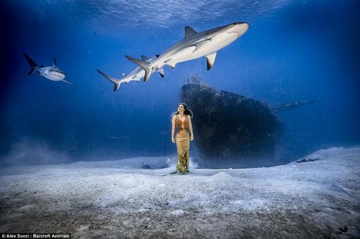 В 2014 году было зарегистрировано всего 72 случая неспровоцированного нападения акул на человека по