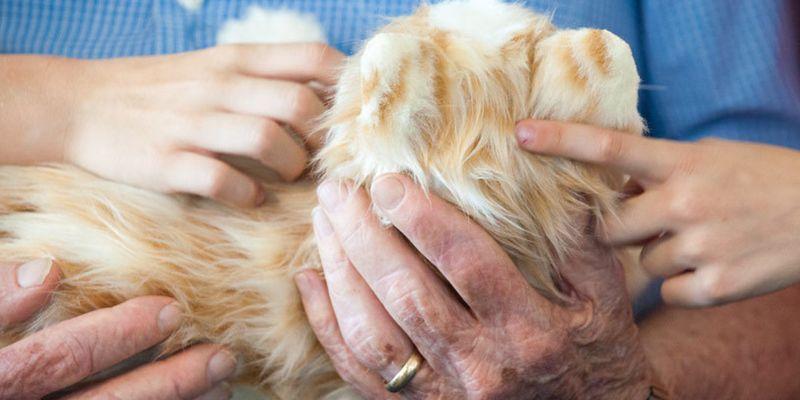 2. Робокоты Joy For All умеют делать многое из того, что и обычные домашние кошки. Кроме хождения на
