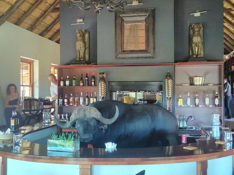 Буйвол, который зашёл в бар отеля выпить чего-нибудь прохладненького.