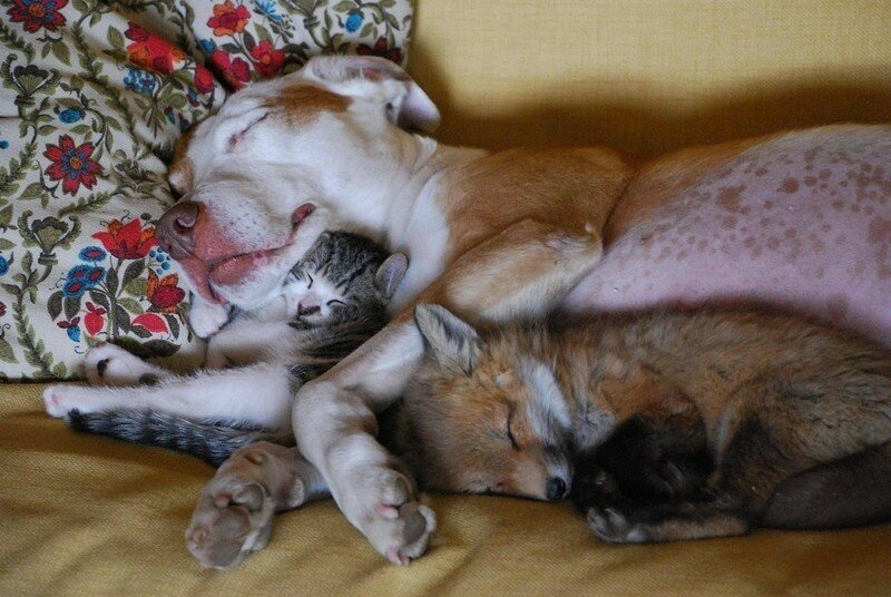 Собака, котенок и лисенок.