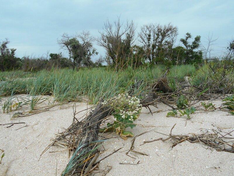 Цветы, пески, лесок ... DSCN5902.JPG