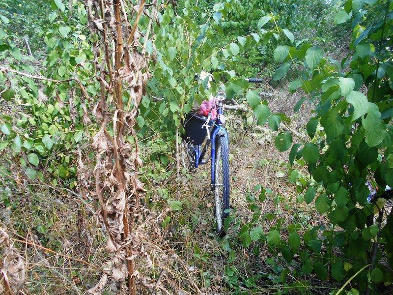 В лесу ... DSCN7951.JPG