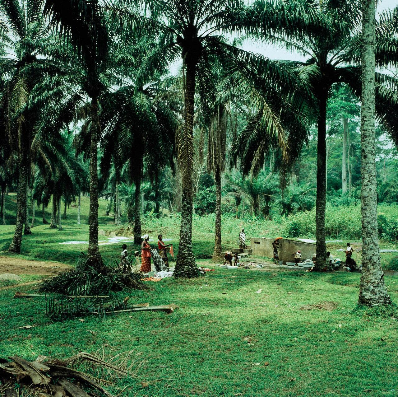 Ода. Женщины за стиркой в пальмовой роще