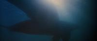 Оседлавший кита / Whale Rider (2002/BDRip/HDRip)