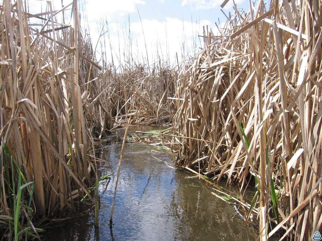 В плавнях реки Боромля