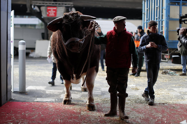 A French farmer leads his bull in the livestock area as preparations on the eve of the opening of th