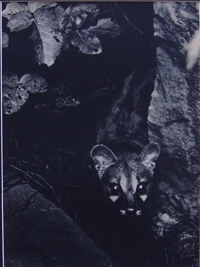 1937. Крадущийся Ночной охотник