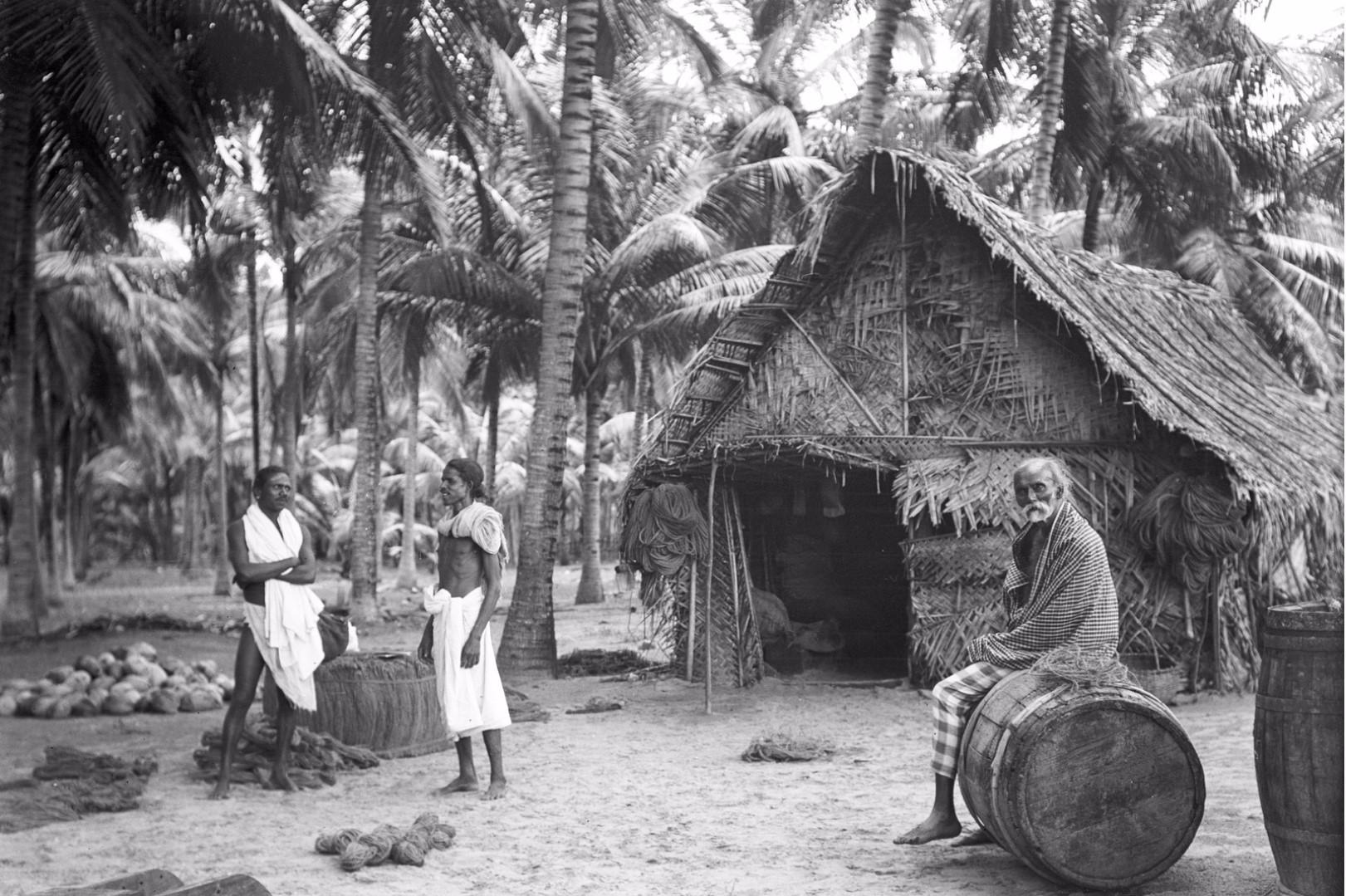 264. Калкуда. Хижина сингальского рыбака