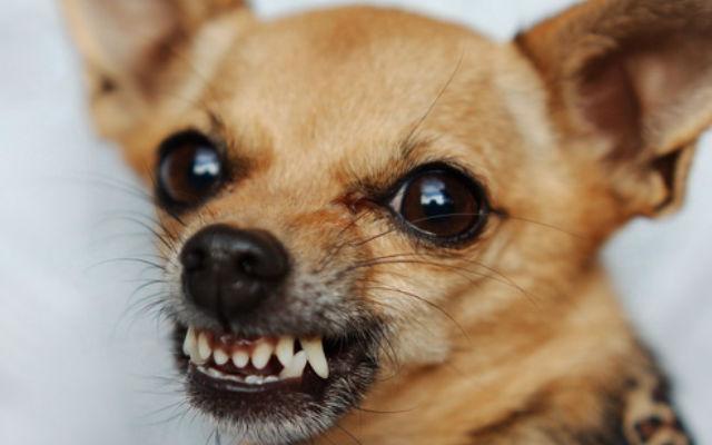 собака лает.jpg