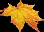 AutumnBreeze_MoleminaScrap_el (6).png