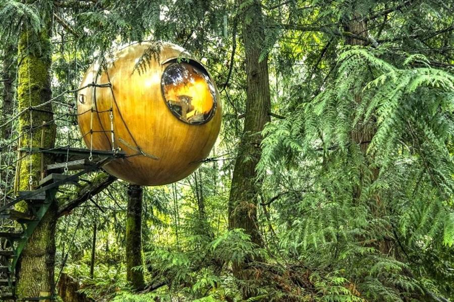 Канадцы просто взяли классическую идею дома на дереве и вывели ее на следующий уровень, превратив до