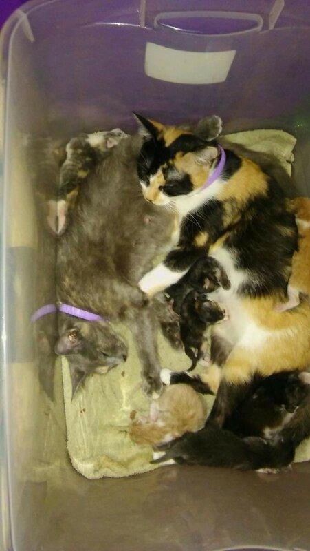 Две мамы-подружки с котятами