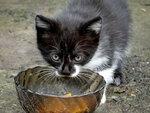 Портрет котёнка