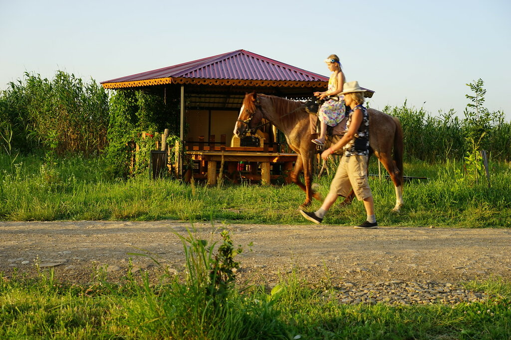"Эко-поселение ""Здравое"". Катание на лошади."