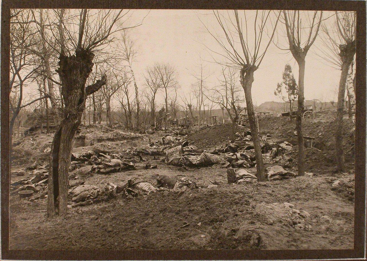 27. Лошади, убитые перед сдачей крепости (у деревни Седласка)