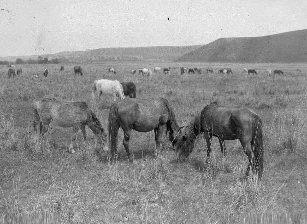 Лошади на пастбище у реки Текес