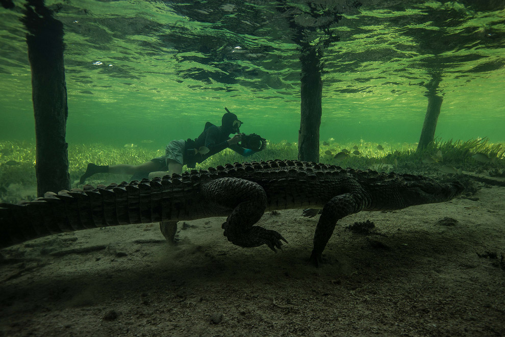 6. Существует древняя легенда о том, что крокодил, поедая добычу, плачет «крокодиловыми слезами