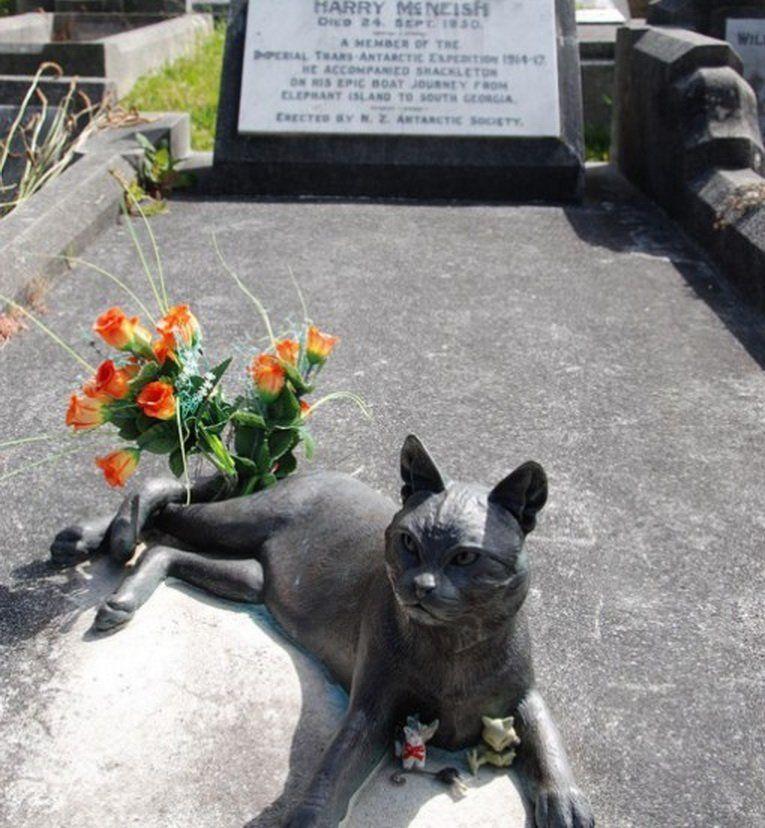Этот памятник коту установлен в Веллингтоне как дань памяти всем тем, кто подвергался испытаниям и б