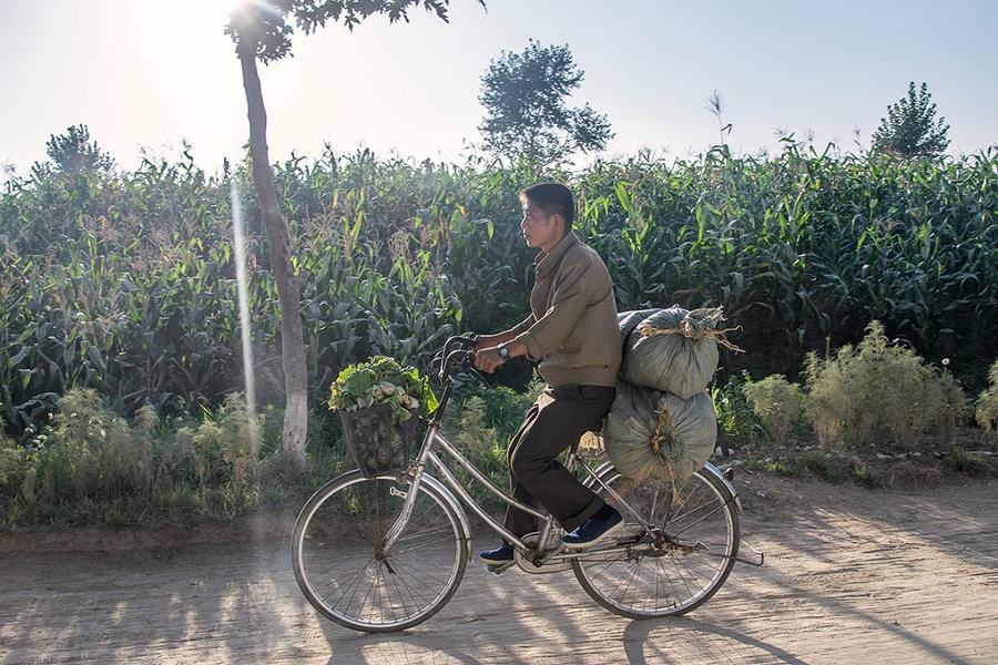 13. Мужчина везет овощи на своем велосипеде в Нампхо, в 50 км к юго-западу от Пхеньяна