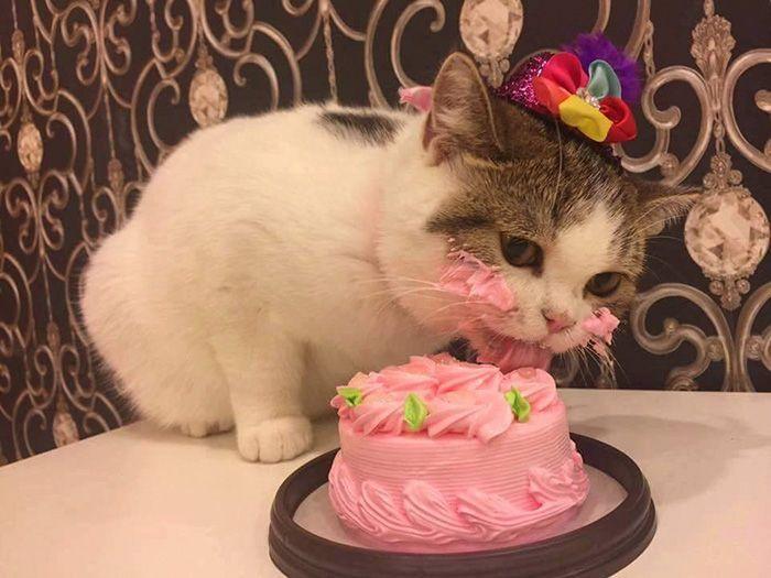 Торт для кота