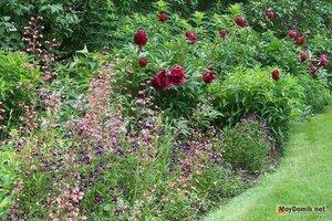 Сад - огород 0_141a11_e6eb48a8_M