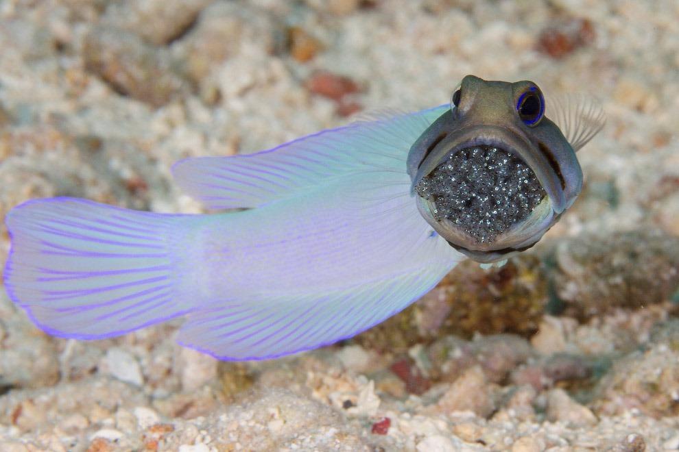 HD глубина море