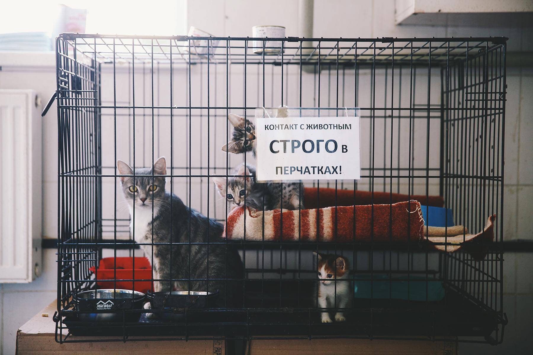 Что нужно для содержания кота