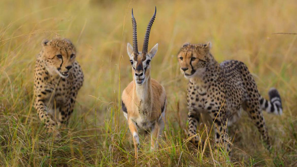 Дэвид Ллойд. Потрясающие образы животных в дикой природе Кении