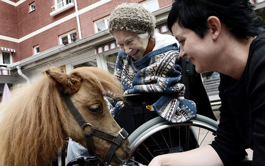 Пони-терапия для пожилых шведов (13 фото)