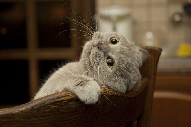 Факты о котах 1. Твоя нервная система будет в порядке. Кошачье мурлыканье снижает уровень стресса и