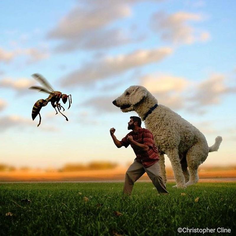Атака с осой Кристофер пытается защитить пса от осы.